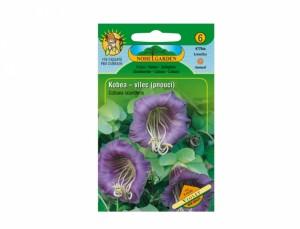 Kobea - vilec pnoucí Violet 8 semen