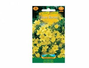 Semená Linum flavum - Ľan žltý