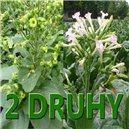 Tabak Selský + Virginský - cca 500 semienok