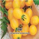 Rajče - Ildi žluté - semena 0,2 g