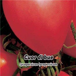 Rajčiak kolíkový-Cuor di blue (zelenina: Lycopersicon lycopersicum) 0,2 g osiva paradajok