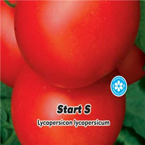Rajčiak kolíkový-F1 Štart S (zelenina: Lycopersicon lycopersicum) 0,2 g osiva paradajok
