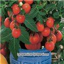 Rajče keříčkové balkónové - semena 0,2 g