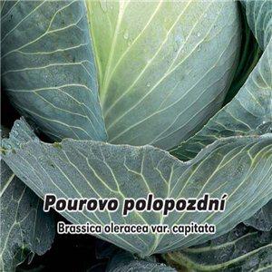 Kapusta hlávková - Pourová neskoré (zelenina: Brassica oleracea) 0,8 g osiva kapusty