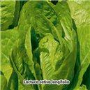 Šalát rímsky Verde Degli - semená 0,8 g