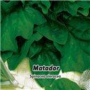 Špenát - Matador - semená 8 g