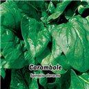 Špenát siaty F1 - druh Carambole - semená 5 g