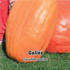 Tykev plazivá velkoplodá - Goliáš (Cucurbita maxima ) 3 g osiva tykve