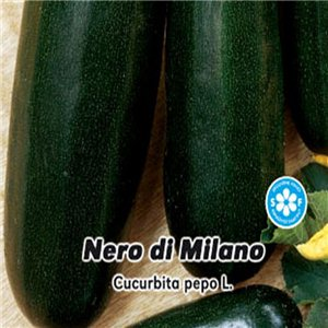 Tykev cuketa - Nero di Milano ( zelenina: Cucurbita pepo ) 1,5 g osiva cukety