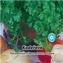 Petržlen vňaťová Kučeravý - semená 3 g