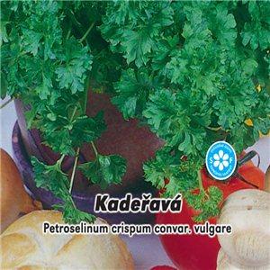 Petržel naťová - Kadeřavá  ( rostlina: Petroselinum crispum ) 3 g osiva petržele