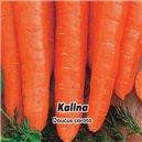 Mrkva karotka skorá F1 Kalina - semená 2 g