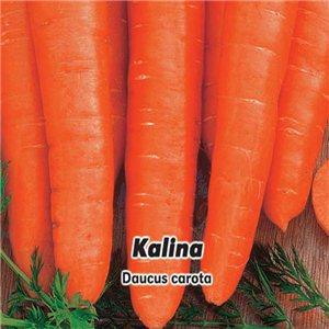 Mrkva karotka skorá F1 - Kalina (zelenina: Daucus carota) 2 g osiva mrkvy