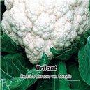 Karfiol letný / jesenný - Briliant - semená 0,49 g