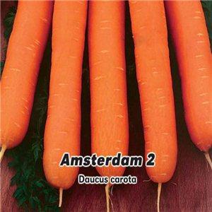 Mrkva karotka skorá - Amsterdam (zelenina: Daucus carota) 3 g osiva mrkvy