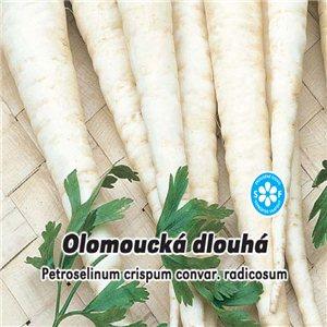 Petržel kořenová - Olomoucká dlouhá ( Petroselinum crispum ) 4 g osiva petržele