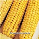 Kukurica cukrová Golden Bantam 7g semien