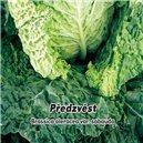 Hlávková Kel skorá - Predzvesť - semená 0,8 g