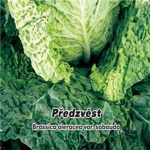Kel hlávkový skorá - Predzvesť (zelenina: Brassica oleracea var. Sabauda) 0,8 g osiva kelu