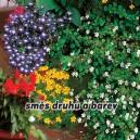 Balkónové letničky - Zmes druhov a farieb - semená 1 g