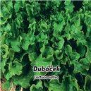 Šalát listový Dubáček - semená 0,5 g