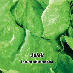Šalát hlávkový letný - Julek (zelenina: Lactuca sativa capitata) 0,5 g osiva šalátu