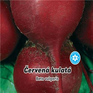 Repa červená - guľatá (zelenina: Beta vulgaris) 4 g osiva repy
