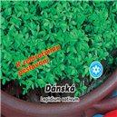 Řeřicha dánská zahradní, celoroční  - semena 5 g