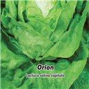 Šalát hlávkový jarný Orion - semená 0,5 g