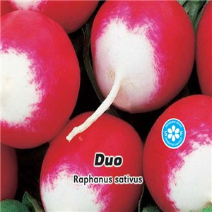 Reďkovka červenobiela - Duo (zelenina: Raphanus sativus) 5 g osiva reďkovky