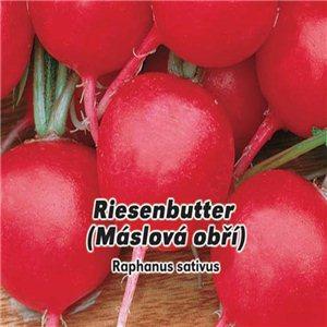 Reďkovka maslová obrie - Riesenbutter (zelenina: Raphanus sativus) 5 g osiva reďkovky