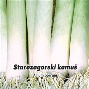 Pór pravý letný - Starozagorski kamus (zelenina: Allium porrum) 1,5 g Osové póru