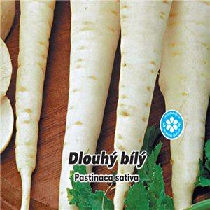 Paštrnák - Dlhý biely (zelenina: Pastinaca sativa) 3g osiva paštrnáku