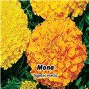 Aksamietnica veľkokvetý, nízky - Mona (žltá / oranžová) - semená 0,6 g