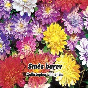 Astra čínská - Průhonický trpaslík směs barev ( Callistephus chinensis ) 0,5 g osiva květin