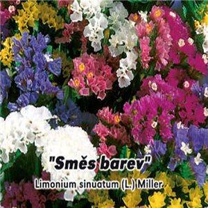 Limonka chobotnice - Zmes farieb (kvetina: Limonium sinuatum) 0,2 g osiva limetky