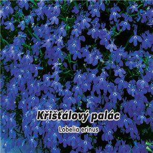 Lobelka drobná - Krištáľový palác (kvetina: Lobelia erinus) 0,2 g osiva lobelky