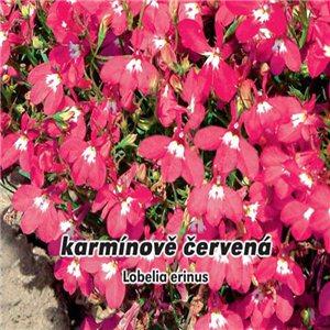 Lobelka drobná - karmínovo červená (kvetina: Lobelia erinus) 0,2 g osiva lobelky