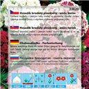 Hvozdník karafiát - Chabaud - Zmes farieb - semená 0,5 g
