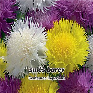 Chrpa císařská - směs barev - ( Amanita caesarea) semena 0,6 g