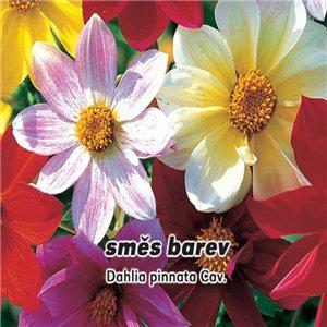 Jiřinka proměnlivá - směs barev ( Dahlia pinnata Cav. ) semena 1 g