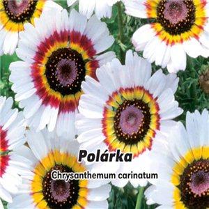 Margarétka maurícijský - Polárka - (letnička: Chrysanthemum carinatum Schousb.) Semená 0,4 g