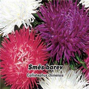 Astra vysoká k řezu - Směs barev ( Callistephus chinensis ) 0,5 g osiva  astry