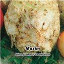 Zeler buľvový - Maxim - semená 400 ks