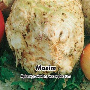 Zeler buľvový - Maxim - (zelenina: Apium graveolens) semená 400 ks