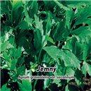 Zeler listový (vňaťový) - Jemný - semená 400 ks