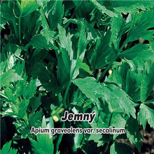 Zeler listový (vňaťový) - Jemný - (zelenina: Apium graveolens) semená 400 ks