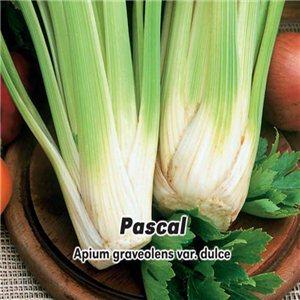 Celer řapíkatý Pascal