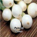 Cibuľa jarná lahôdková - Pompei 1, - semená 5 g