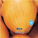 Cibuľa jarná žltá - Alice - semená 2 g